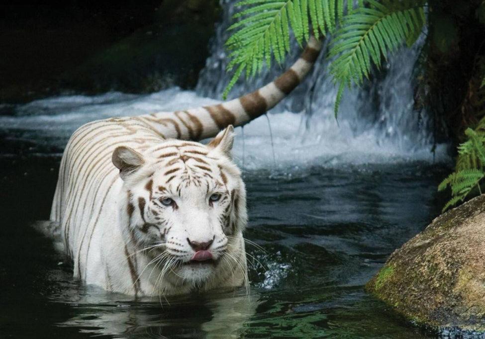 tiger-creek-web